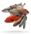 R-pescaderia